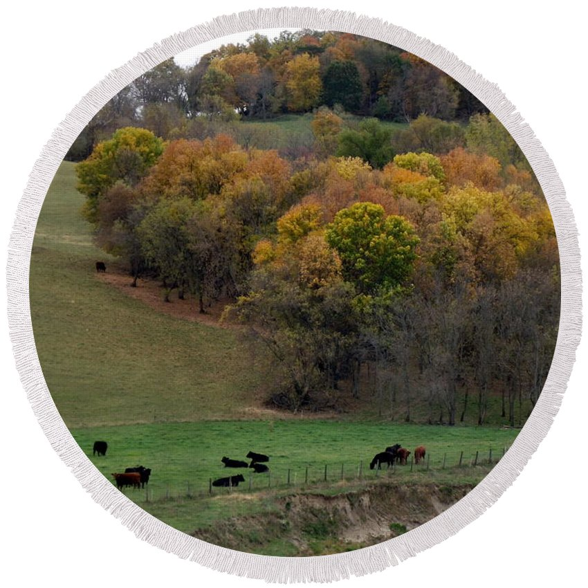 Cows Round Beach Towel featuring the photograph Autumn Range by Bonfire Photography