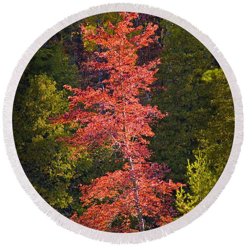 Art Round Beach Towel featuring the photograph Autumn Scene Of Colorful Red Tree Along The Little Manistee River In Michigan No. 0902 by Randall Nyhof