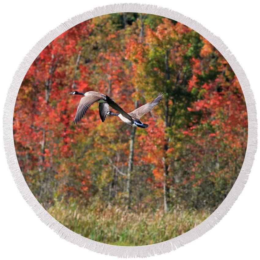 Autumn Round Beach Towel featuring the photograph Autumn Vermont Geese And Color by Deborah Benoit