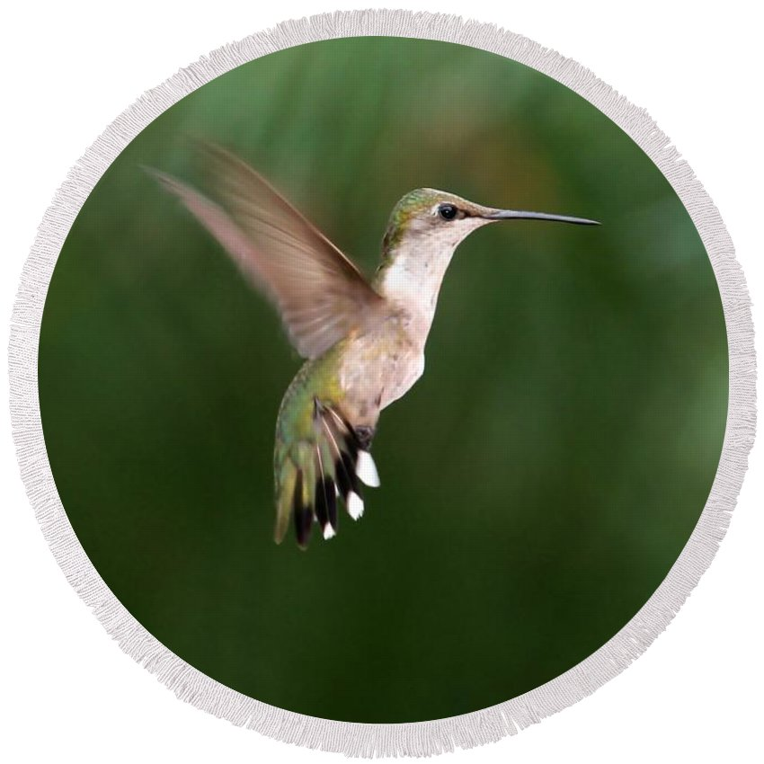 Hummer Round Beach Towel featuring the photograph Awesome Hummingbird by Sabrina L Ryan