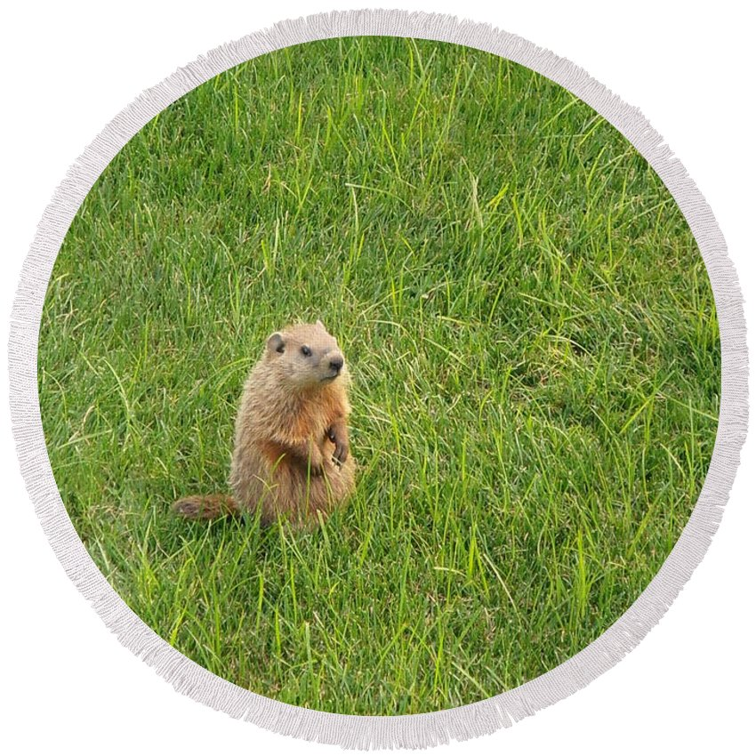 Groundhog Round Beach Towel featuring the photograph Baby Groundhog by Kimberly Perry