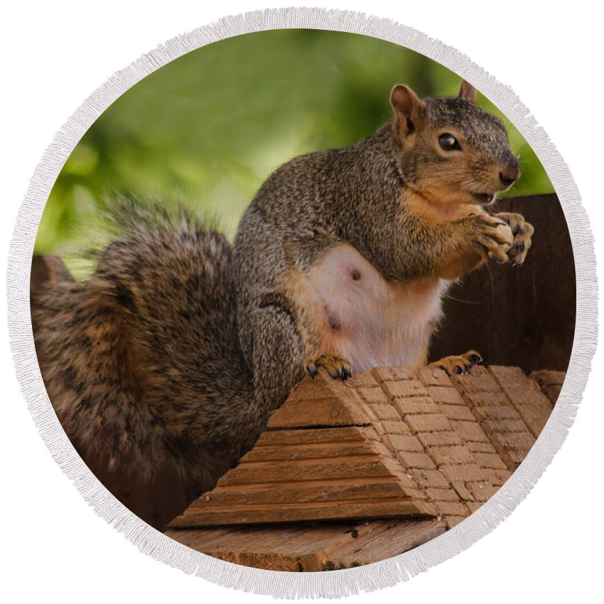 Squirrel Round Beach Towel featuring the photograph Back Yard Pet by Robert Bales