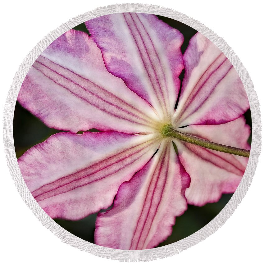 Clematis Round Beach Towel featuring the photograph Backlit Clematis by Susan Candelario
