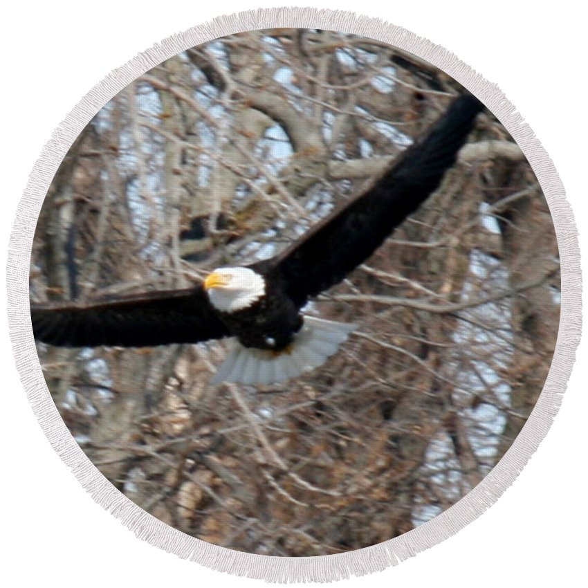 Bald Eagle Round Beach Towel featuring the photograph Bald Eagle At Full Wingspan by Crystal Heitzman Renskers
