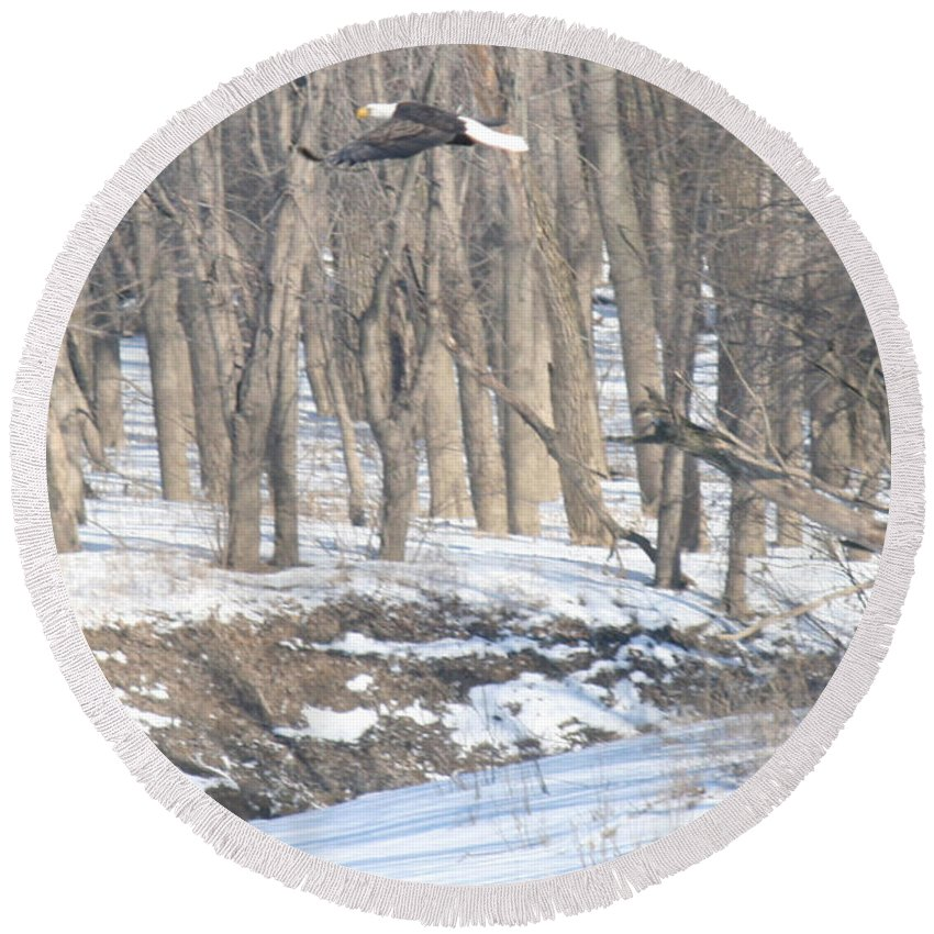 Bald Eagle Round Beach Towel featuring the photograph Bald Eagle Flying Over Snowy Bank by Crystal Heitzman Renskers