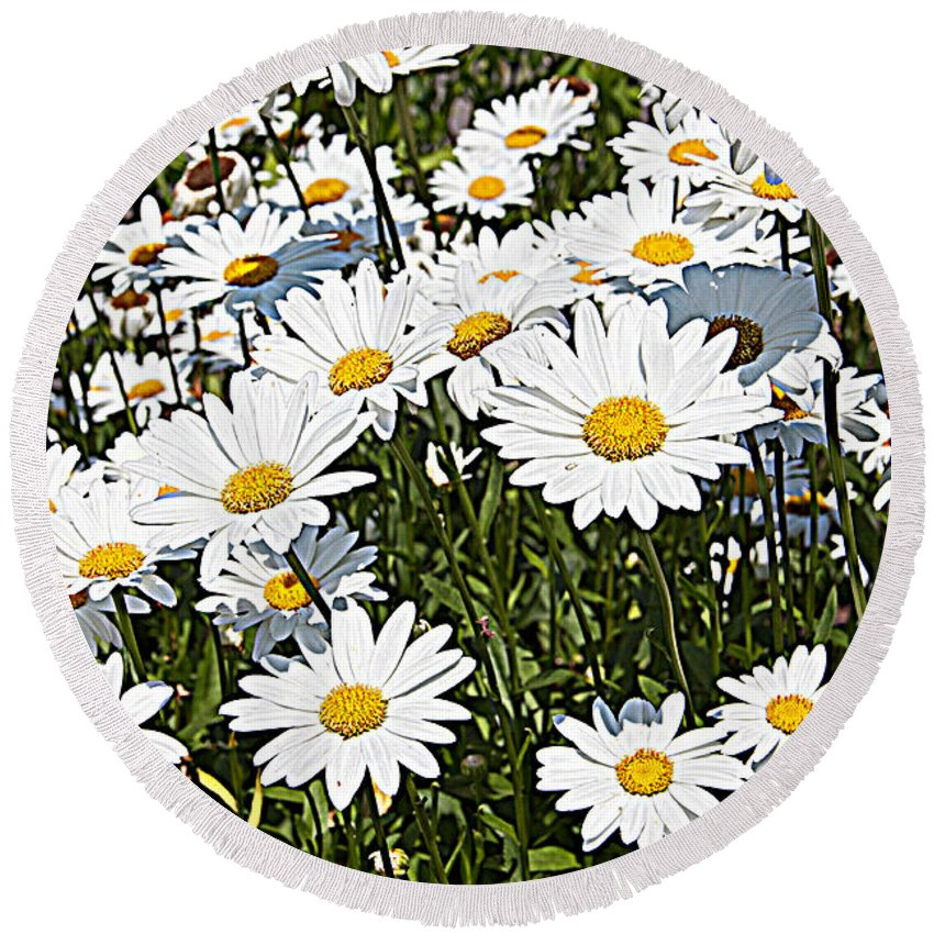 Daisies While Yellow Flowers Floral Round Beach Towel featuring the photograph Beautiful Daisies by Alice Gipson