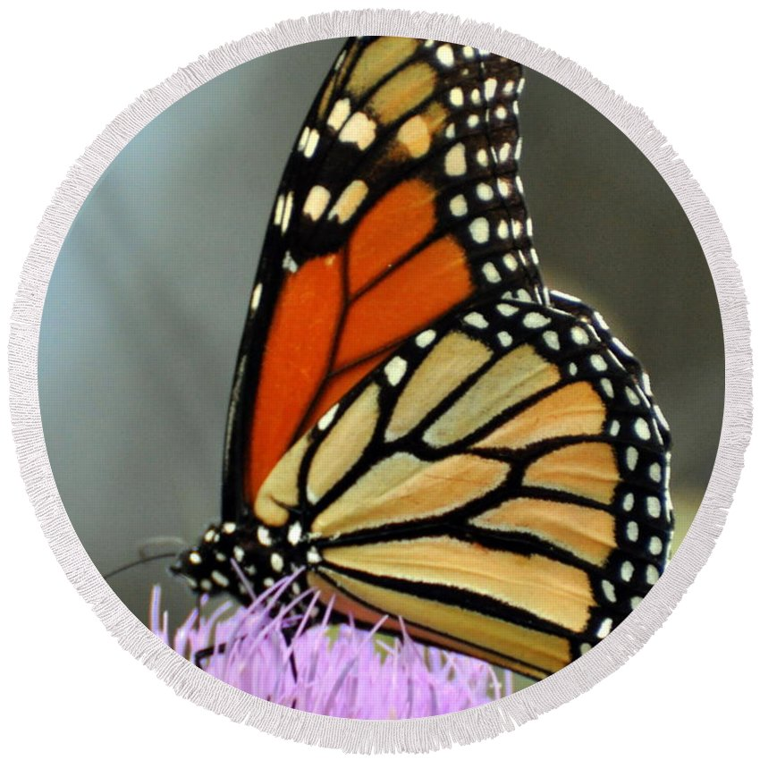 Butterfly Round Beach Towel featuring the photograph Beautiful Monarch by Marty Koch