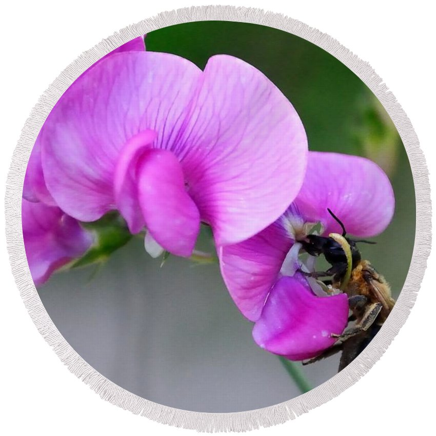 Round Beach Towel featuring the photograph Bee In The Pink - Greeting Card by Mark Valentine