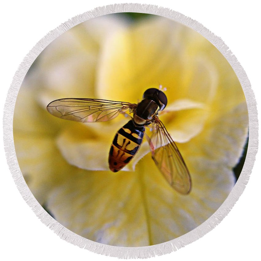 Bee Round Beach Towel featuring the photograph Bee On Yellow Flower by Matt Zerbe