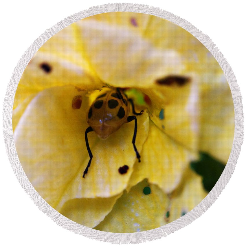 Beetle Round Beach Towel featuring the photograph Beetle In Yellow Flower by Matt Zerbe