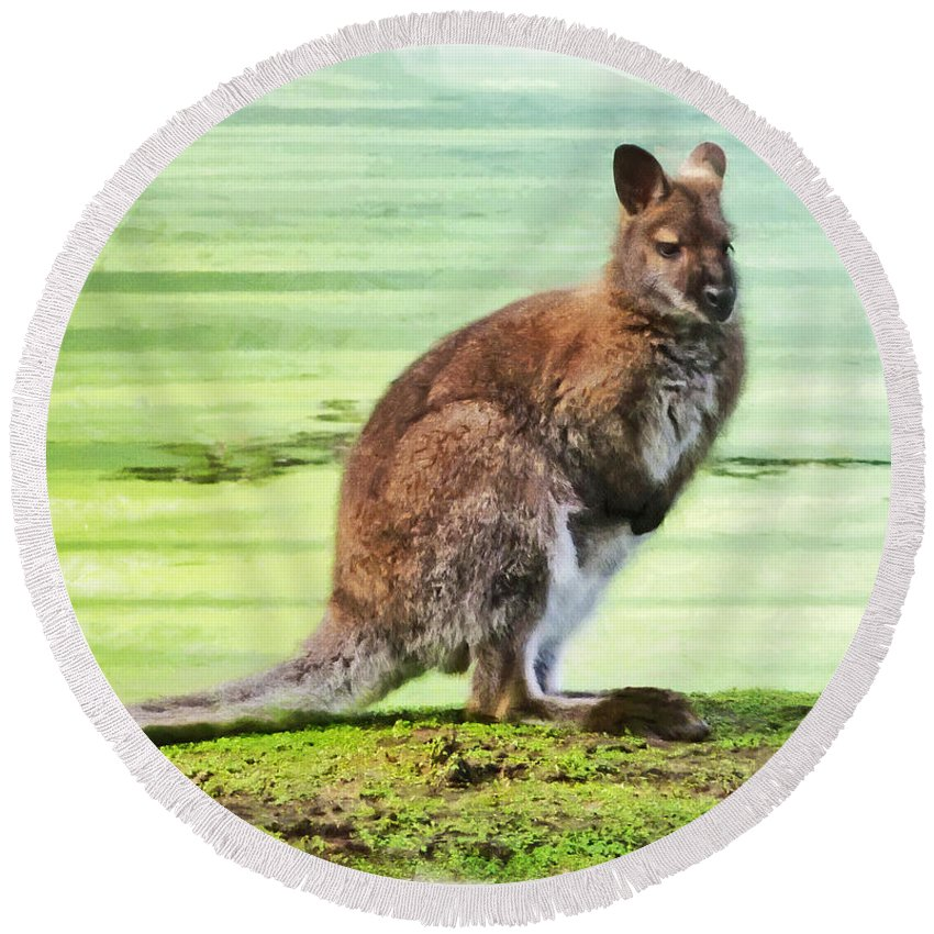 Bennets Wallaby Round Beach Towel featuring the photograph Bennets Wallaby by Steve Taylor