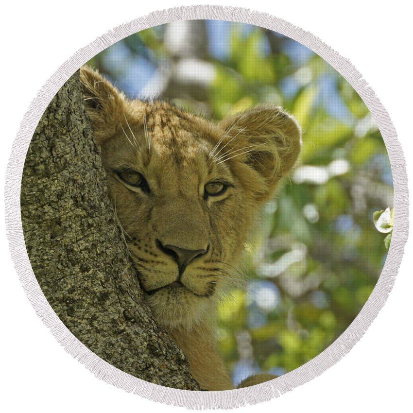 Africa Round Beach Towel featuring the photograph Biding My Time by Michele Burgess