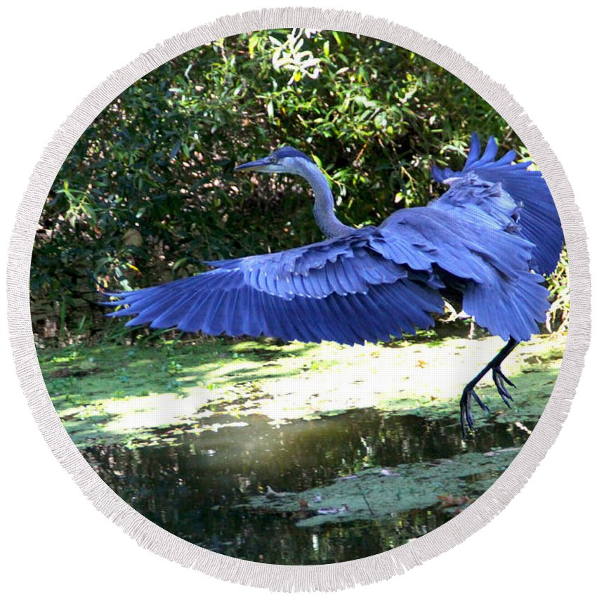 Big Round Beach Towel featuring the photograph Big Blue In Flight by Diana Haronis