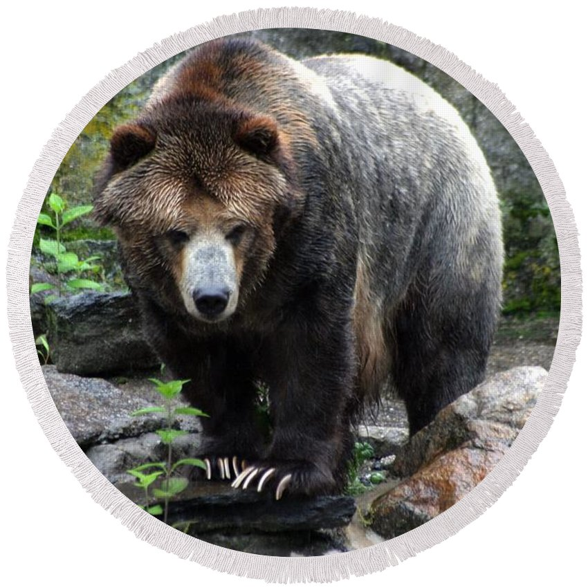 Bear Round Beach Towel featuring the photograph Big Brown Bear by Living Color Photography Lorraine Lynch