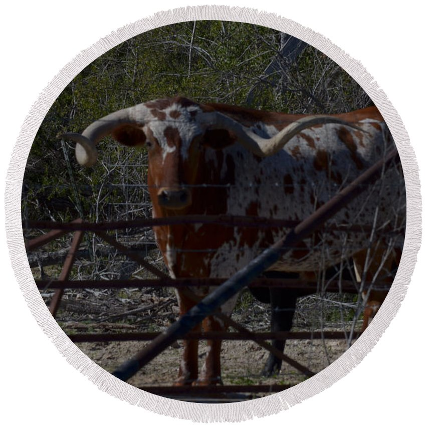 Animal Round Beach Towel featuring the photograph Big Bull Long Horn by Donna Brown