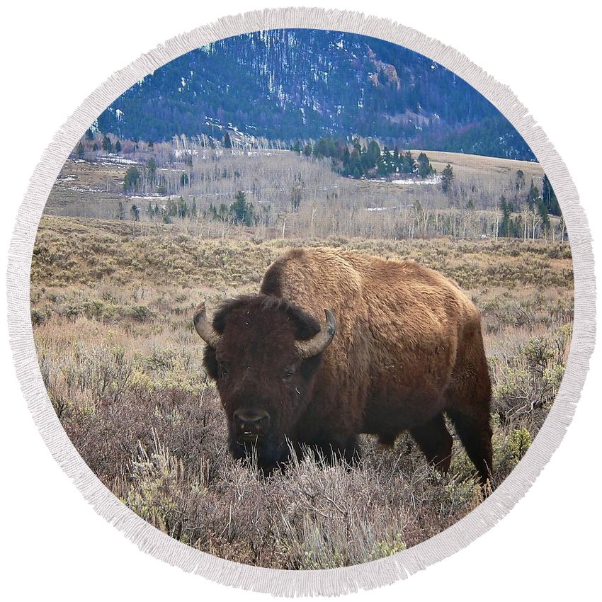 Yellowstone National Park Round Beach Towel featuring the photograph Big Old Boy by Eric Tressler