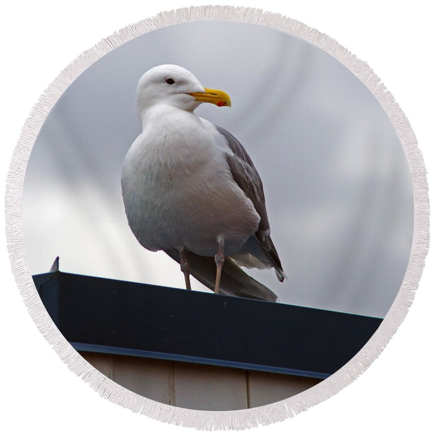 Seagull Round Beach Towel featuring the photograph Big Seagull by Randy Harris
