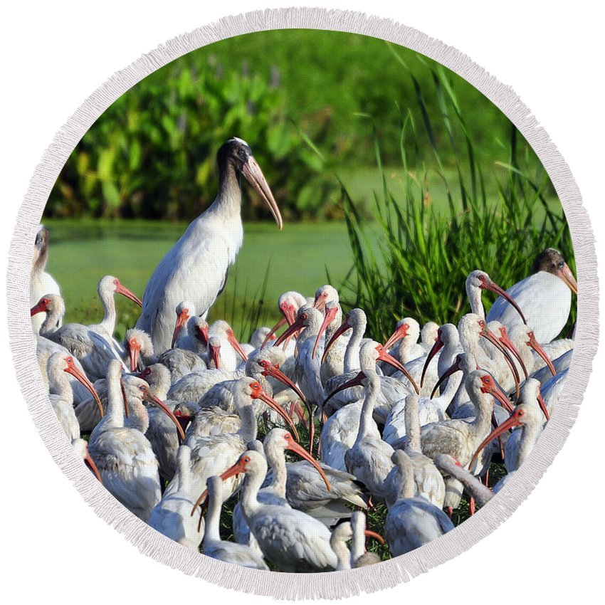 Ibis Round Beach Towel featuring the photograph Birds Of A Feather by Al Powell Photography USA