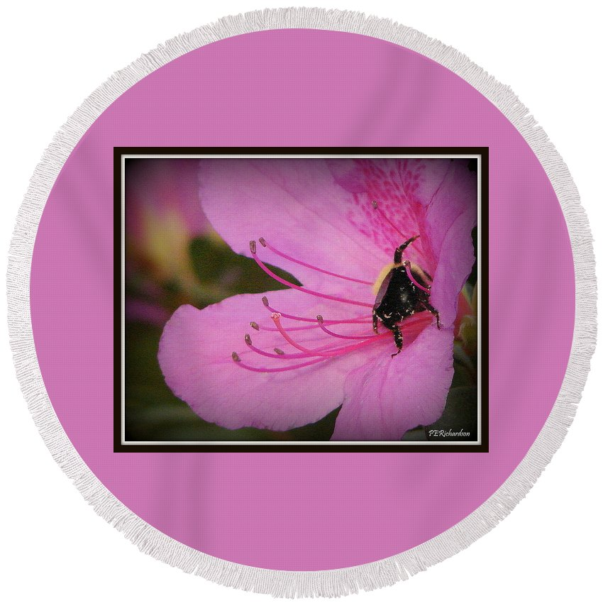 Bee Round Beach Towel featuring the photograph Bite This by Priscilla Richardson