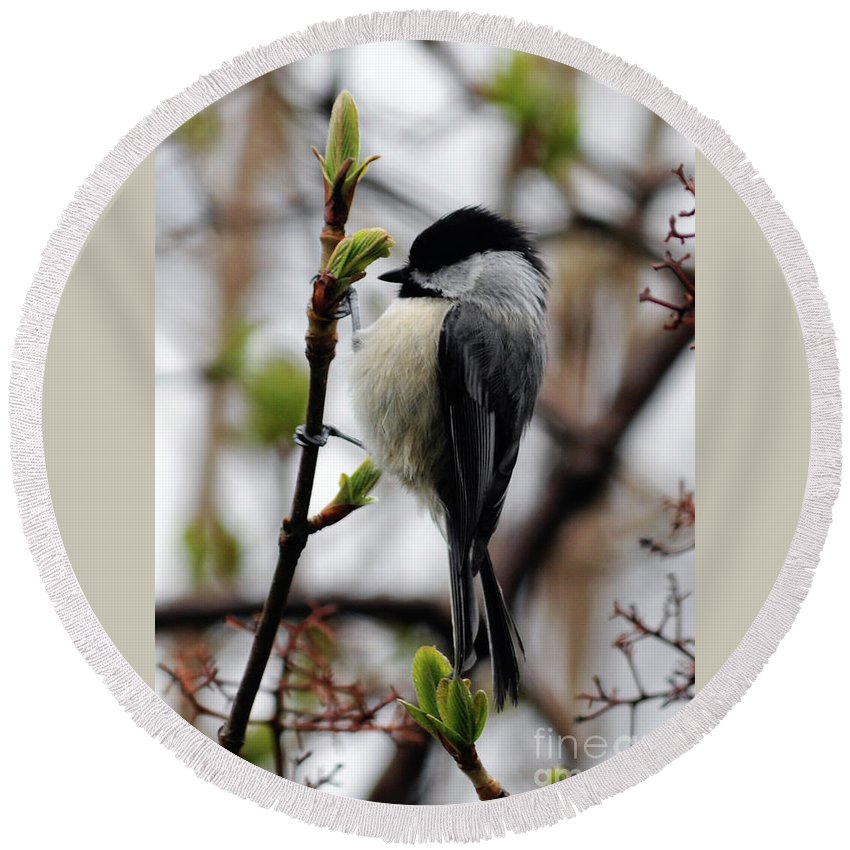 Green Round Beach Towel featuring the photograph Black-capped Chickadee On Staff by Ronald Grogan