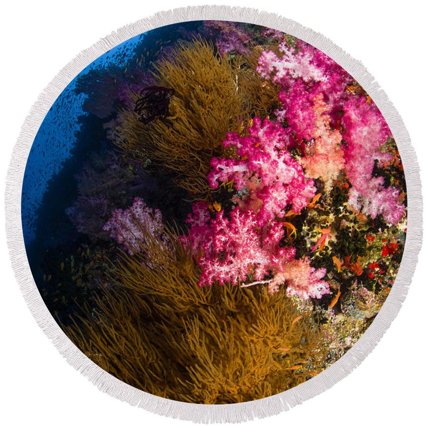 Fish Round Beach Towel featuring the photograph Black Coral And Soft Coral Seascape by Todd Winner