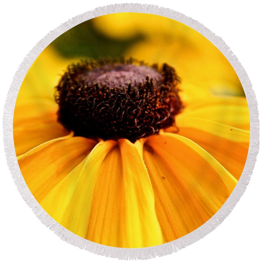 Plant Round Beach Towel featuring the photograph Black Eyed Susan Summer by Susan Herber
