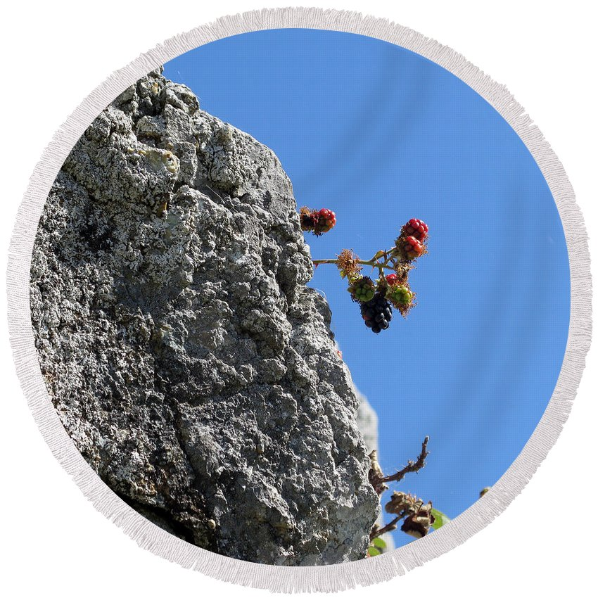 Blackberry Round Beach Towel featuring the photograph Blackberry On The Rock Top. Square Format by Ausra Huntington nee Paulauskaite