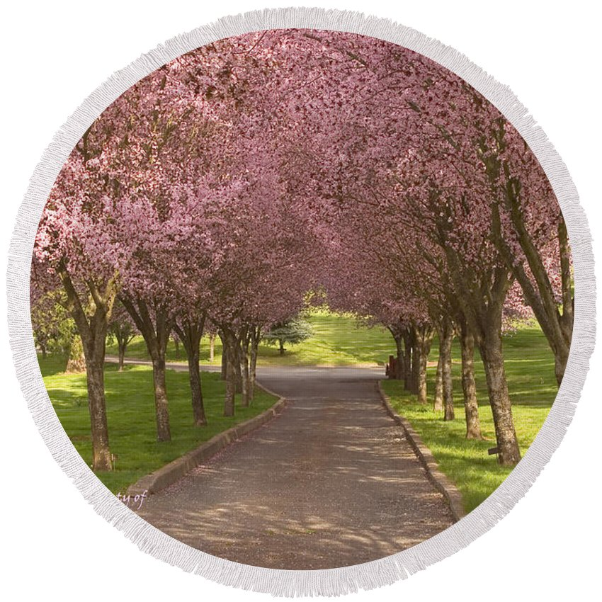 Blooms Round Beach Towel featuring the photograph Blooms Along The Lane by Mick Anderson