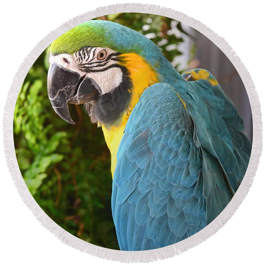 Nature Round Beach Towel featuring the photograph Blue And Yellow Macaw by Debbie Portwood