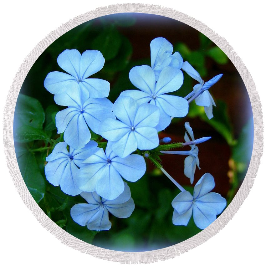 Blue Round Beach Towel featuring the photograph Blue Blossoms by Carla Parris