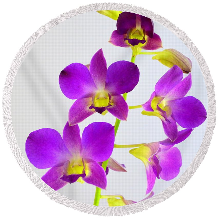 Orchid Round Beach Towel featuring the photograph Blue Charm X Aridang Blue Orchid - 1 by Mary Deal