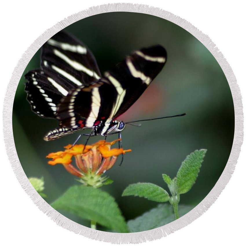 Butterfly Round Beach Towel featuring the photograph Blue Eye by Living Color Photography Lorraine Lynch
