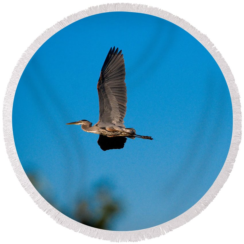 Bird Round Beach Towel featuring the photograph Blue Heron In Flight by Sean Wray