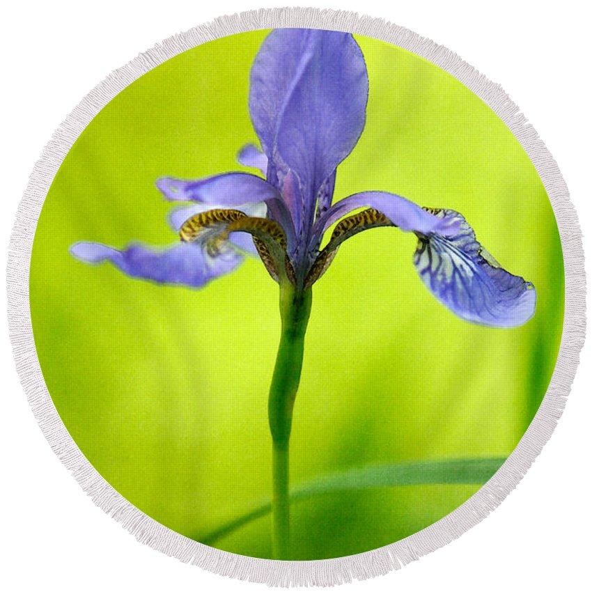 Iris Round Beach Towel featuring the photograph Blue Japanese Iris by Lois Bryan