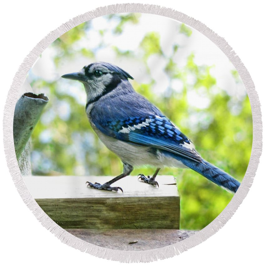 Nature Round Beach Towel featuring the photograph Blue Jay by Debbie Portwood