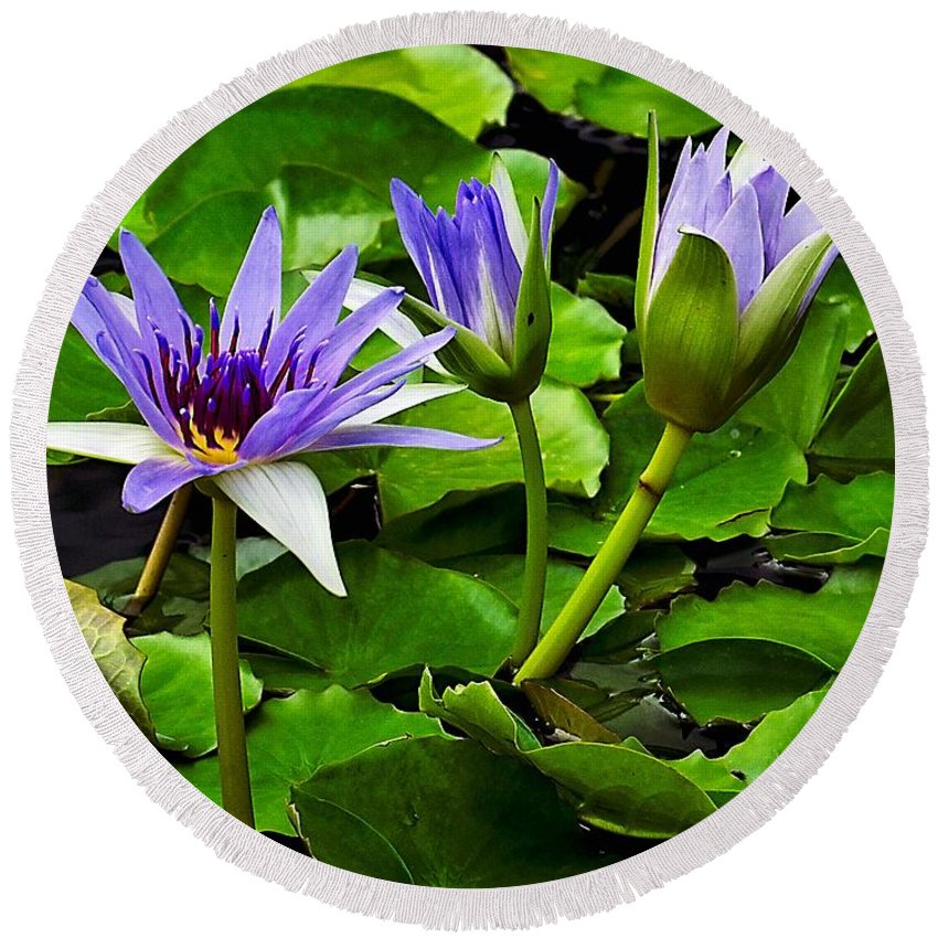 Aquatic Round Beach Towel featuring the photograph Blue Lilies by Nick Zelinsky