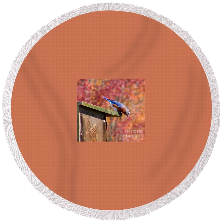 Blue Round Beach Towel featuring the photograph Bluey by Art Dingo