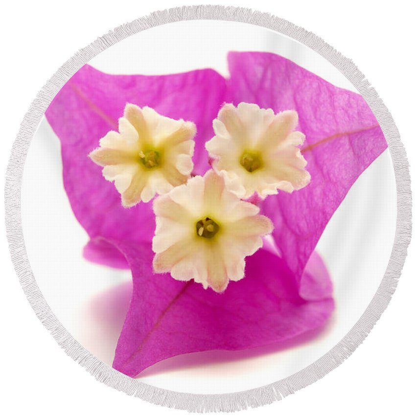 White Background Round Beach Towel featuring the photograph Bougainvillea Flower by Fabrizio Troiani