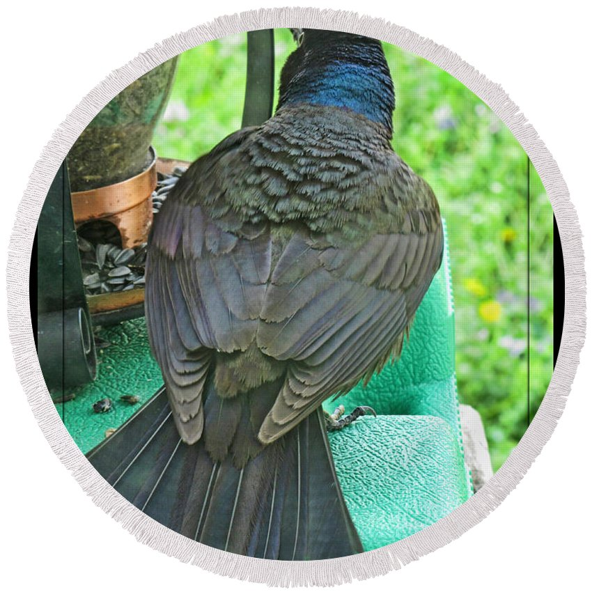 Nature Round Beach Towel featuring the photograph Brewers Blackbird Giving A Warning by Debbie Portwood