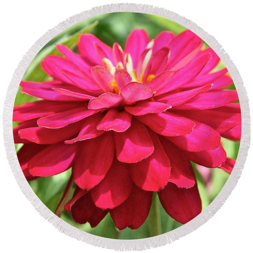 Plant Round Beach Towel featuring the photograph Brilliant Zinnia by Susan Herber