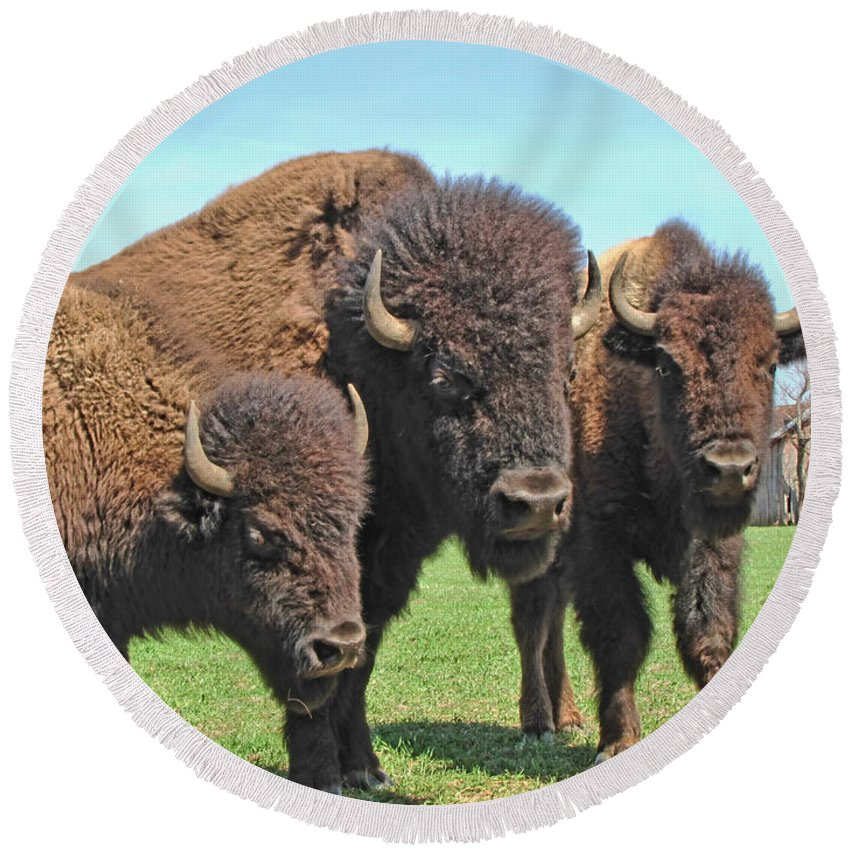 Round Beach Towel featuring the photograph Buffalo Group II by Debbie Portwood