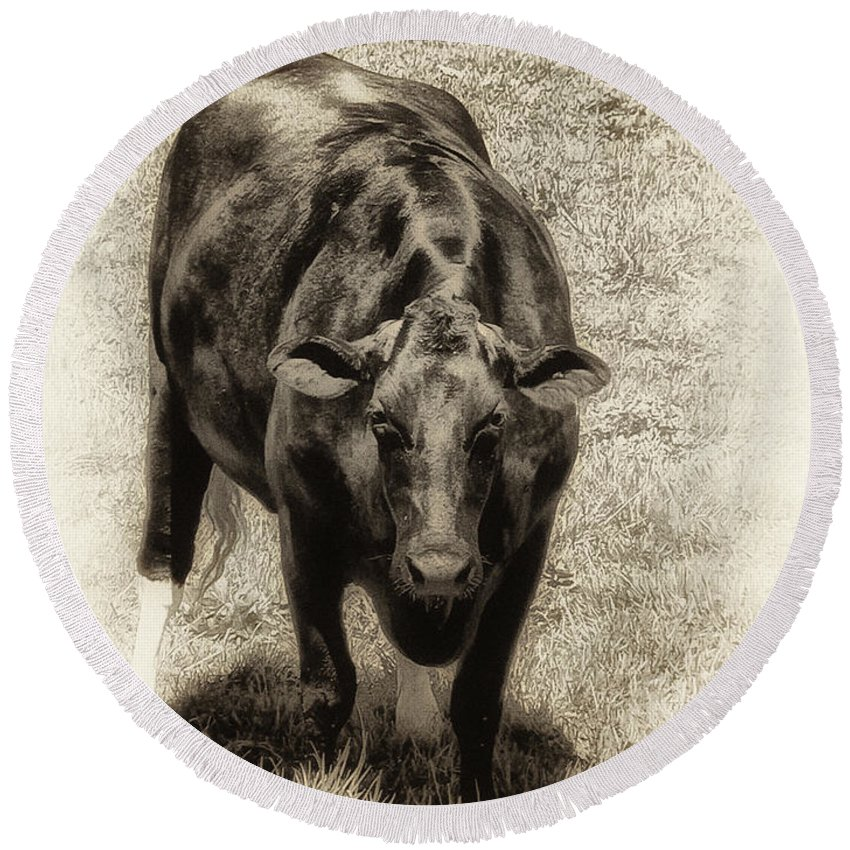Bull Round Beach Towel featuring the photograph Bull by Bill Cannon