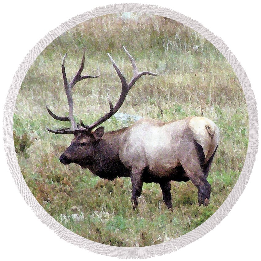 Elk Round Beach Towel featuring the photograph Bull Elk by Brenda Hagenson