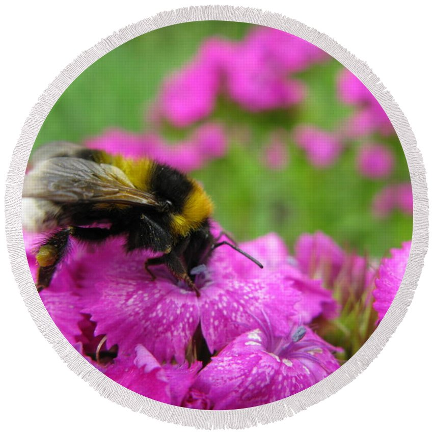 Bumble Bee Round Beach Towel featuring the photograph Bumble Bee Searching The Pink Flower by Ausra Huntington nee Paulauskaite
