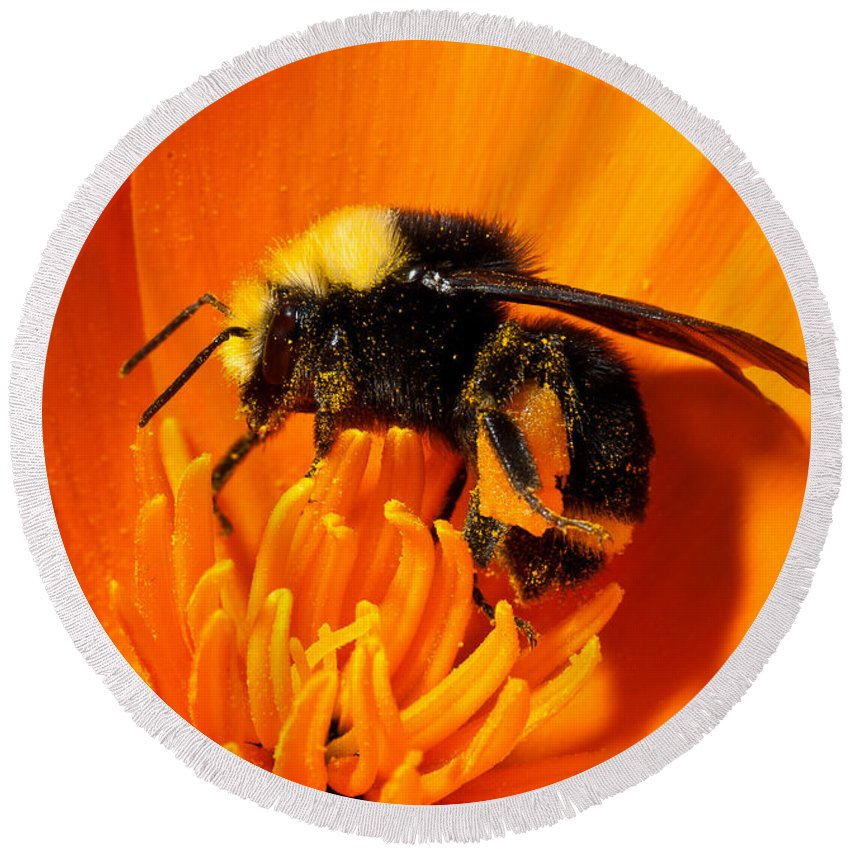 Insect Round Beach Towel featuring the photograph Bumblebee On Flower by Greg Nyquist