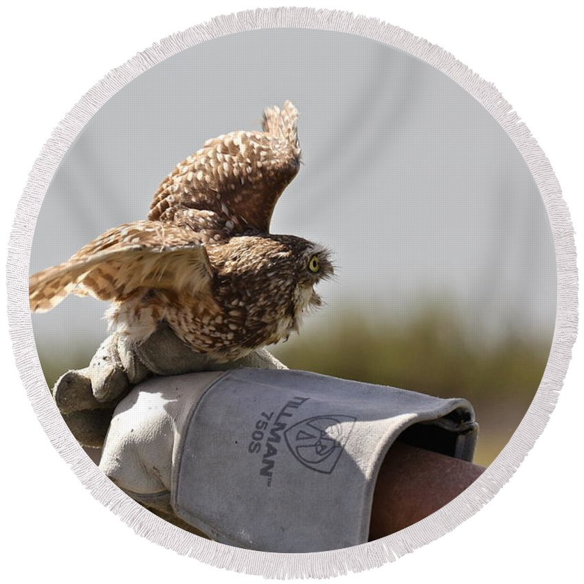 Owl Round Beach Towel featuring the photograph Burrowing Owl by Diana Hatcher