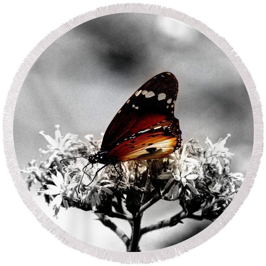 Butterfly Round Beach Towel featuring the photograph Butterfly In Color by David Morefield