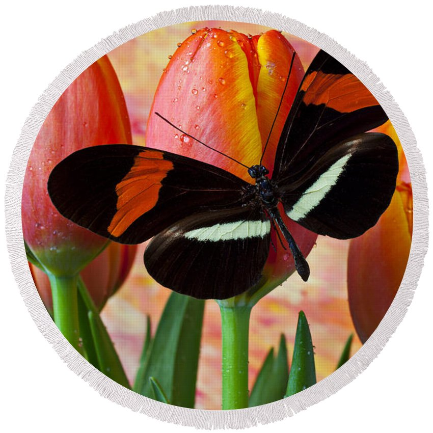 Butterfly Round Beach Towel featuring the photograph Butterfly On Orange Tulip by Garry Gay