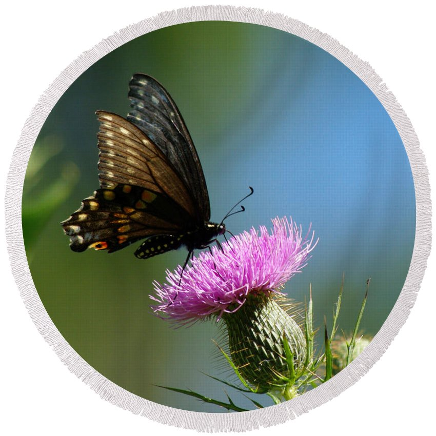 Butterfly Round Beach Towel featuring the photograph Butterfly On Thistle by Jenny Gandert