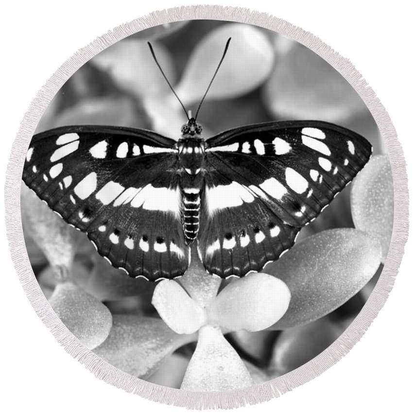 B&w Round Beach Towel featuring the photograph Butterfly Study #0061 by Floyd Menezes